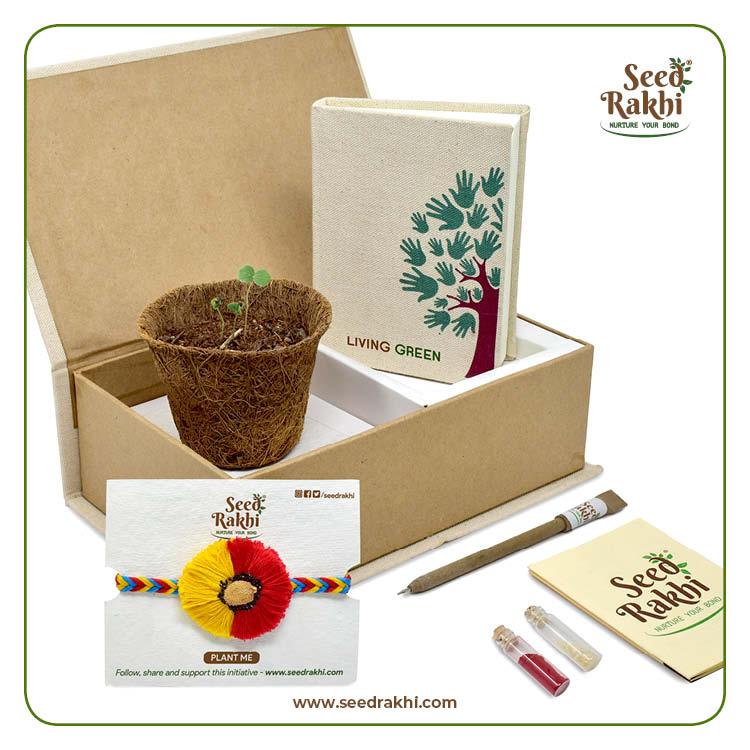 Seed Rakhi 6.1